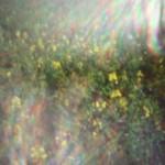 SLR Magic Toy Lens Pinhole for Micro Four Thirds sample image 5